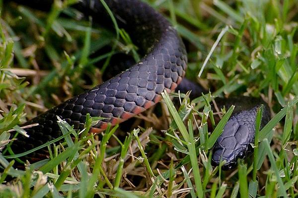 Приснилась черная змея