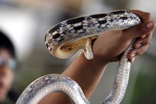 Укусила змея во сне