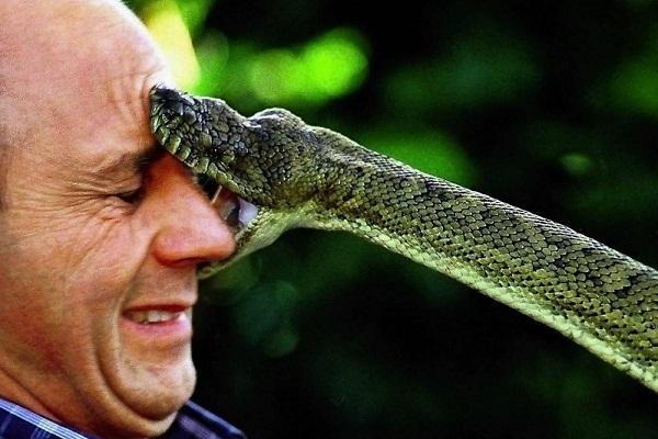 Змея укусила к чему снится