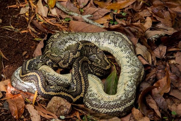 Убитая змея во сне что означает