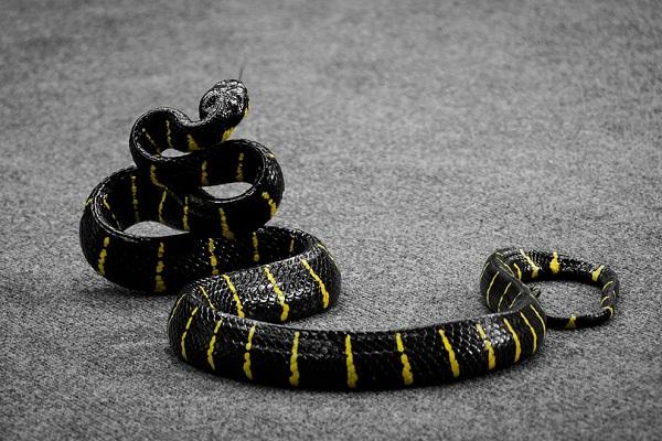 Змея во сне для мужчины - что значит