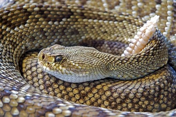 Змея приснилась мужчине
