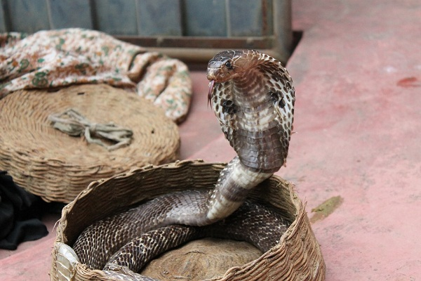Что означает змея для мужчины