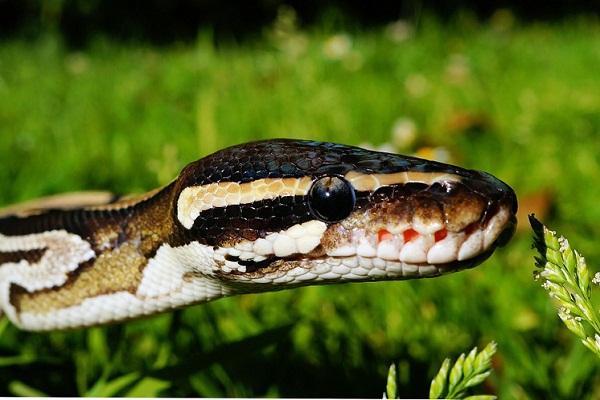 Змея во сне - значение для мужчины