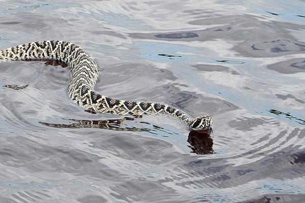 Что символизирует змея в воде