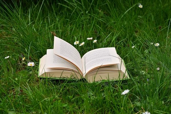 Зеленая трава во сне - что символизирует