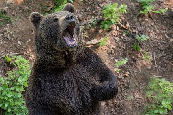 Убегать от медведя во сне что значит