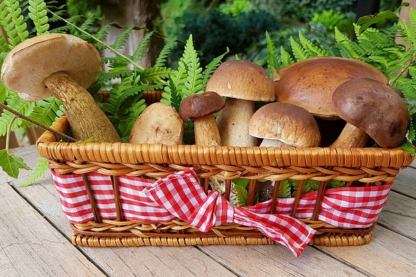 К чему снятся грибы женщине