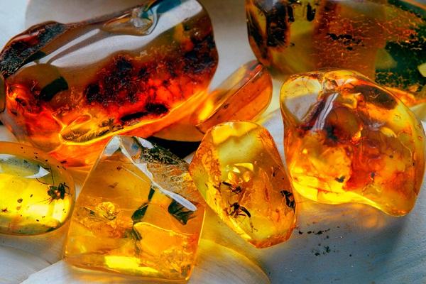 Янтарь - происхождение и свойства природного камня