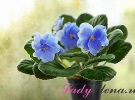 Цветы для счастья