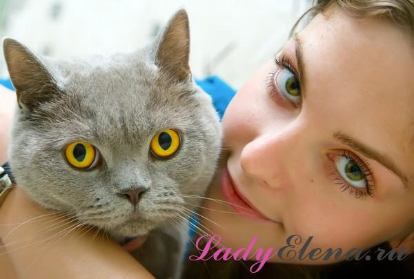 Примета: смотреть кошке в глаза