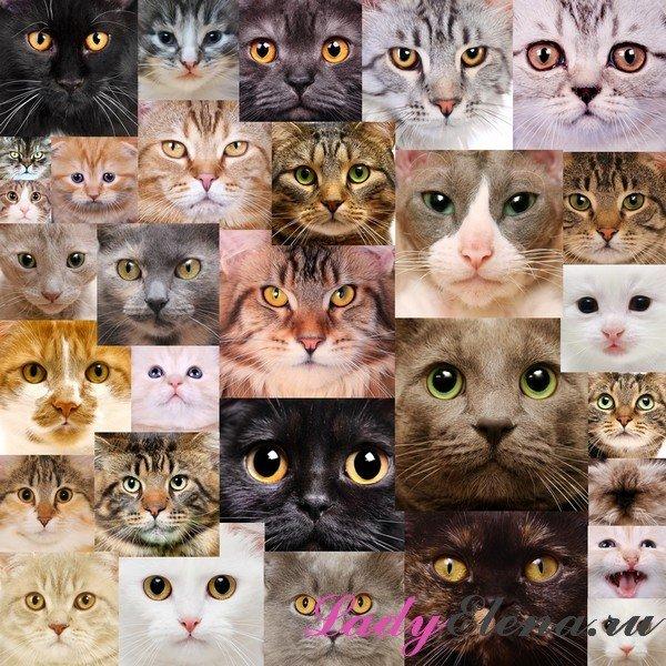 Кошка-талисман по гороскопу