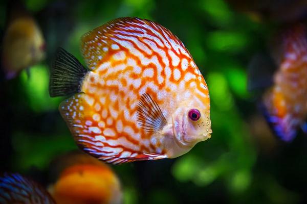 Приснилась рыба