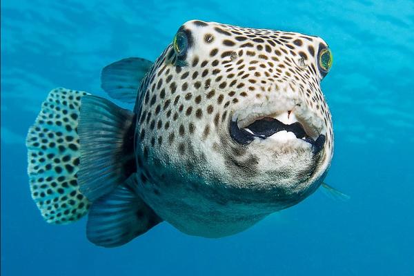 Рыба во сне