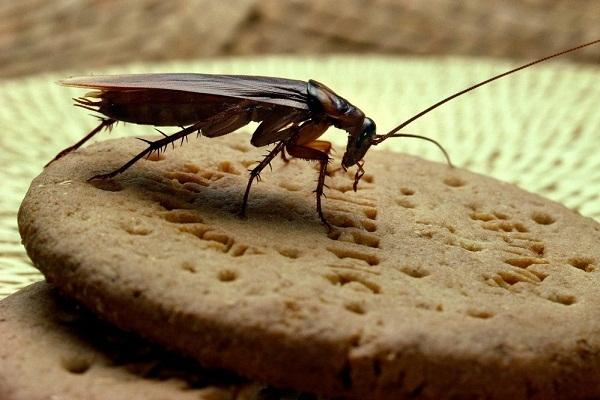 Приснился таракан что значит