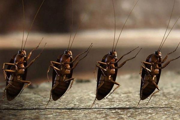 Тараканы что означают во сне