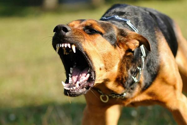 Во сне нападает собака - к чему