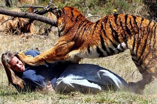 Во сне нападает дикий зверь - толкование