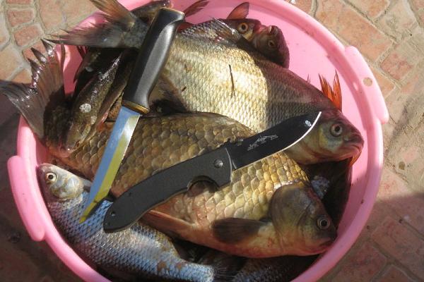 К чему снится чистка рыбы