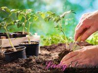 16 мая – день Мавры-Рассадницы: защищаем свою рассаду от невзгод! Приметы дня
